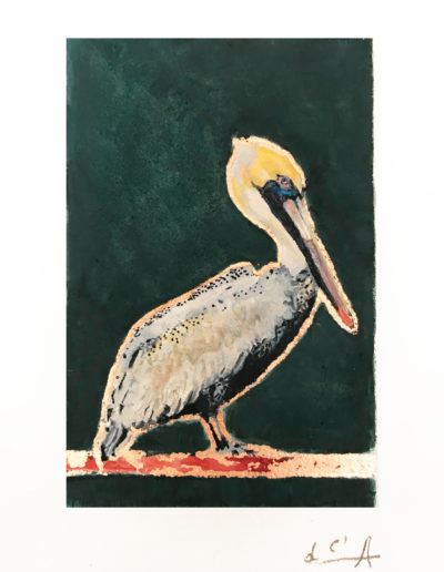 calixte-d'annunzio-pelican