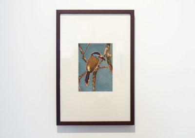 calixte-d'annunzio-toucan