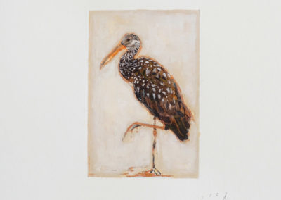 calixte-d-annunzio-oiseau-2